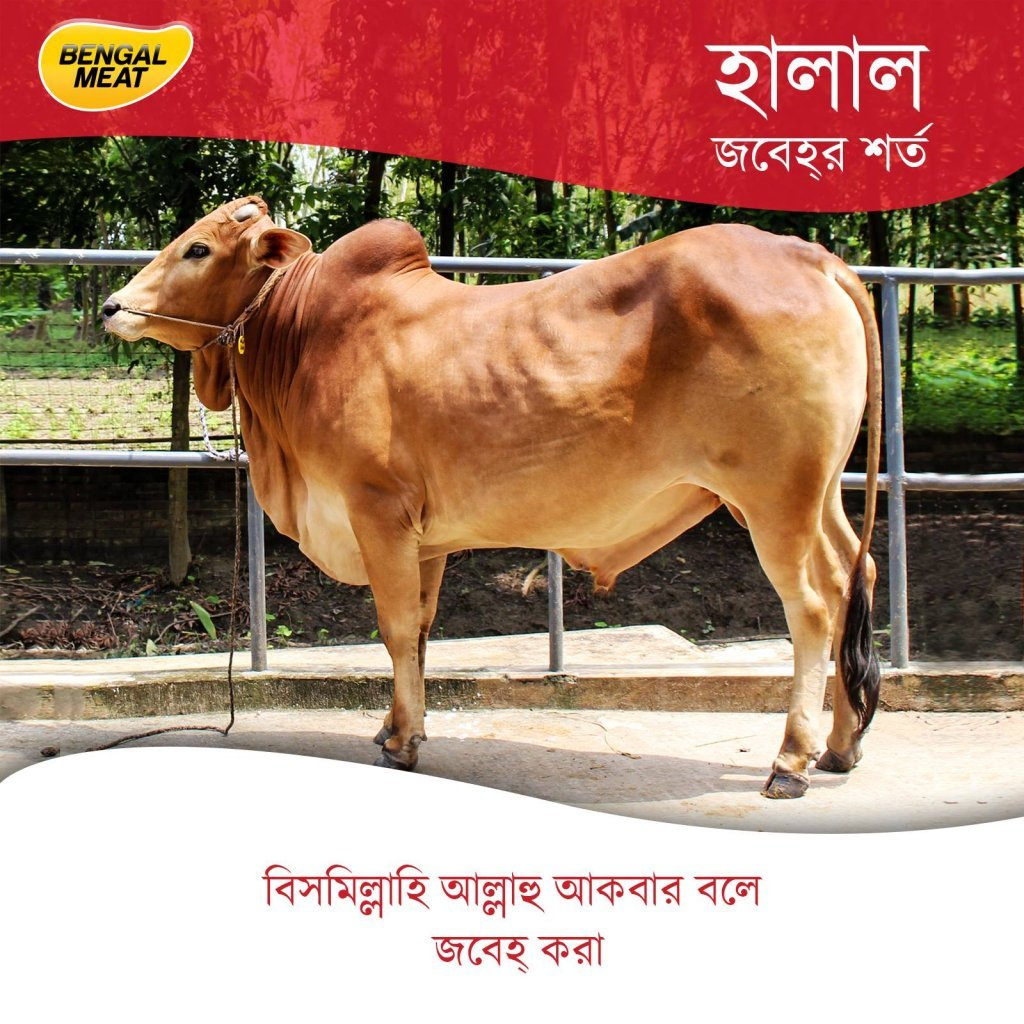 Halal Qurbani by Bengal Meat